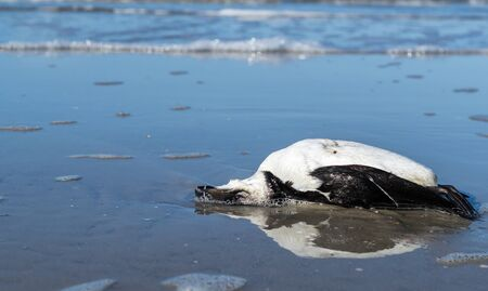 Environmental plastic garbage bird