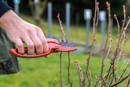 pruning in spring