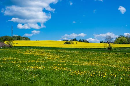 Spring meadow with rapeseed Stockfoto