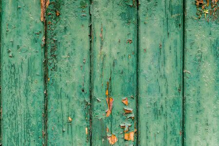 Green wood texture Archivio Fotografico