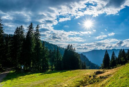 Backlight in the Black Forest