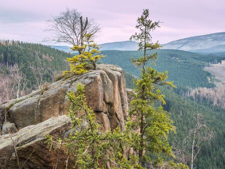 In the Harz National Park