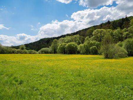 El paisaje está floreciendo en la primavera. Foto de archivo