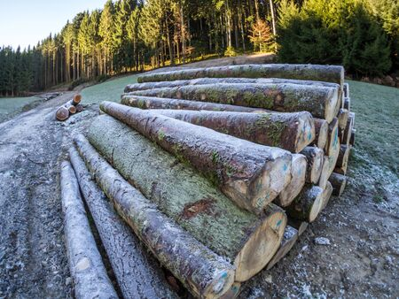 Tree trunks in the Black Forest 版權商用圖片