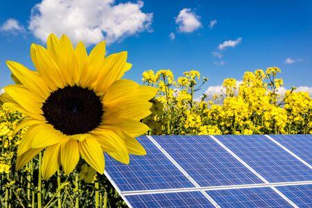 Energia słoneczna Energia wiatrowa na słońcu z rzepakiem