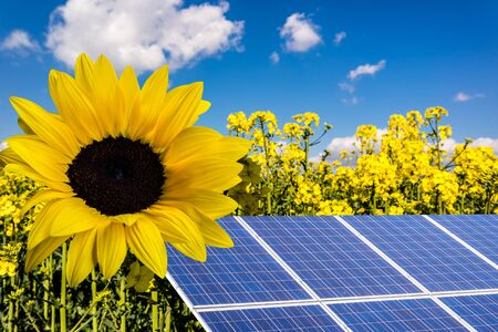 Sonnenenergie Windkraft in der Sonne mit Rapes
