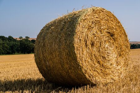 Straw bale harvest at the field