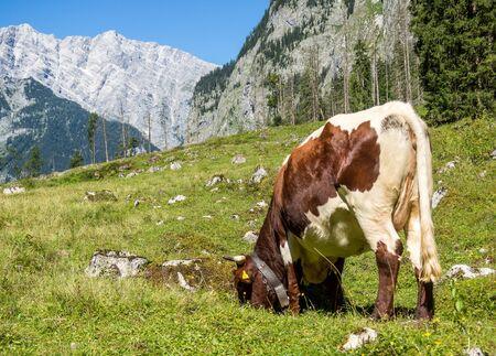 Berchtesgaden Alps in the Summer