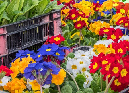 Flower shop in the spring