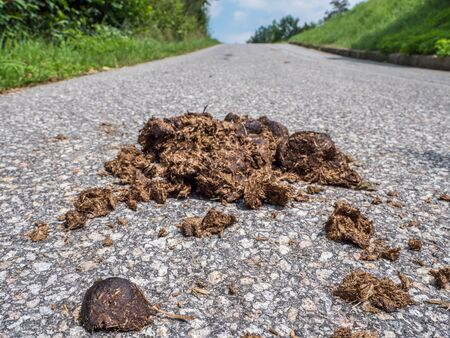 Manure pile on the street