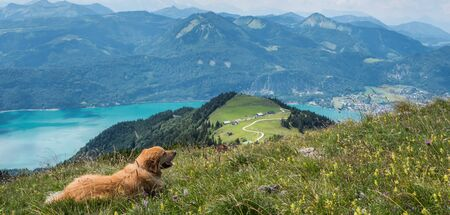 Dog takes a break in Salzkammergut Standard-Bild