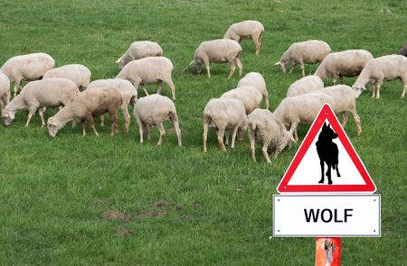 Warning sign Wolf flock of sheep