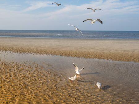 Sea Gulls on the Baltic Sea
