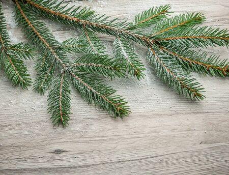 fir branch on wood texture