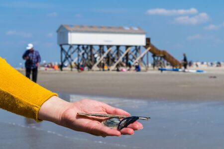 Seashell in hand North Sea in Germany Stock fotó