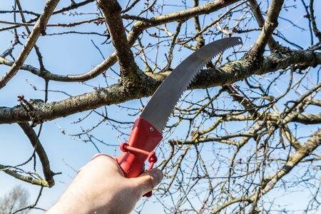 branch saw in garden background