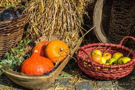 colorful autumnal pumpkin basket background