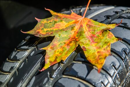 Car tires with birch leaves