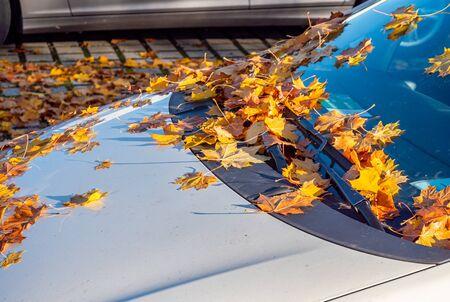 Windscreen full of autumn leaves