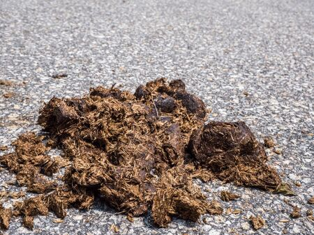 horse manure is on the dirt road