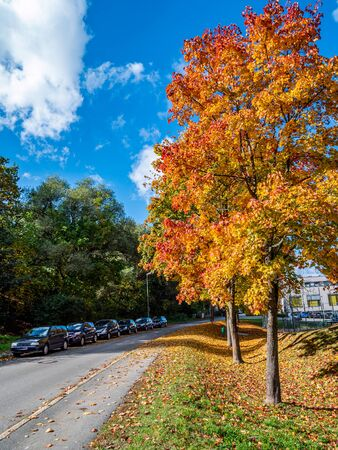 Colorful tree avenue in autumn