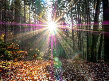 beautiful Sunbeams in autumn forest in Germany Фото со стока