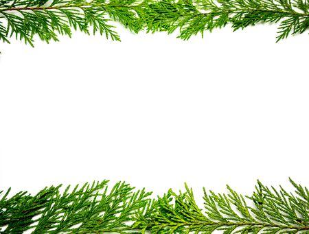 Patrón de marco de plantilla de árbol de la vida