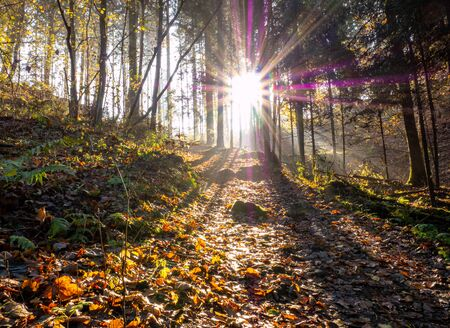 Morning autumn mood in the forest