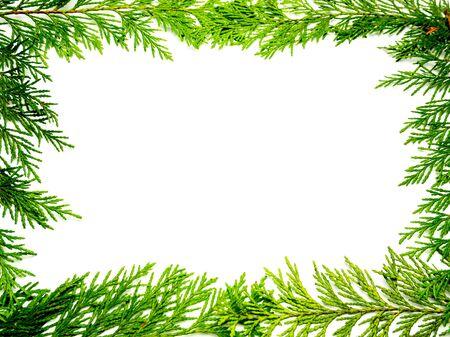 Marco de plantilla de árbol de la vida