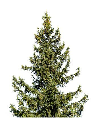 Christmas tree with cones isolated on white background Фото со стока