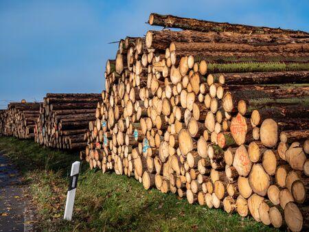 Wooden Forestry felled tree trunks
