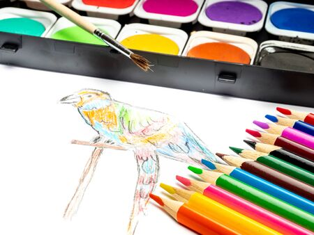 hand-painted parrot with colored pencils and paint box