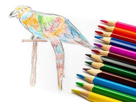 colorful Parrot painted with crayons