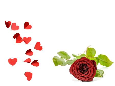 Hearts with Red Rose Valentine's Day Template