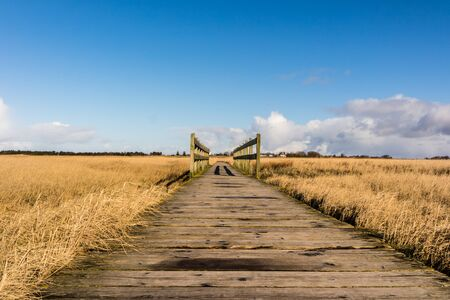 Wooden bridge at the North Sea coast