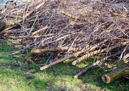 Shrub pruning in spring in the park