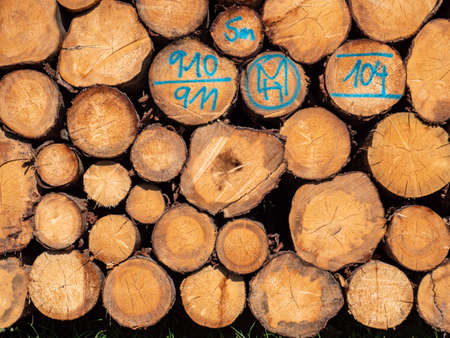 Tree trunks background of lumber material