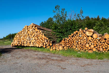 Lumber from the forest industry
