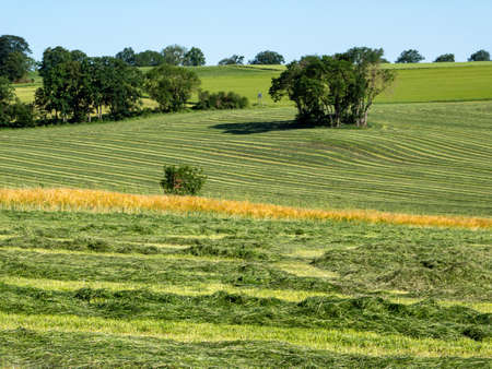 Hay harvest meadow mown grass agriculture farm