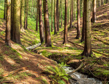 beautiful forest in the Ore Mountains with a river