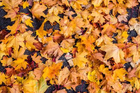 Leaves in autumn texture background Standard-Bild