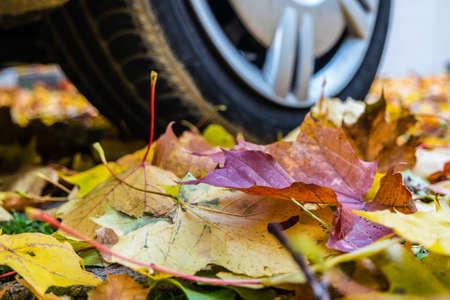 Attention in road traffic in autumn in wet weather Standard-Bild