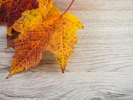 Autumn leaves maple template background Standard-Bild