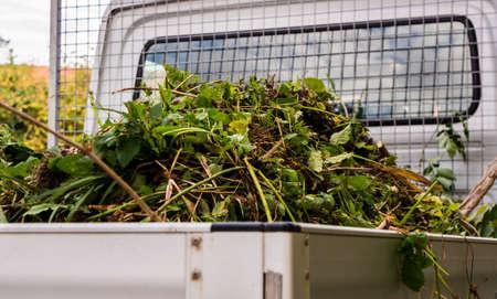 Garden waste on a car Standard-Bild