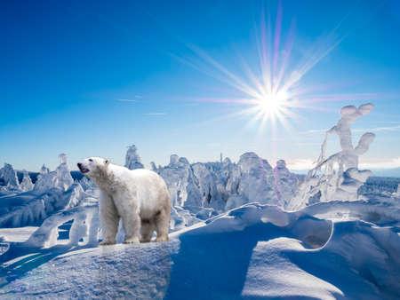 Polar bear in the Arctic under climate change Banco de Imagens