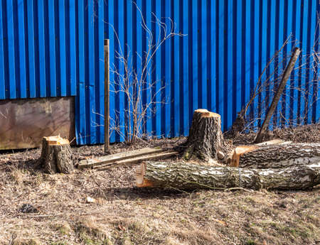 Trees are cut in spring