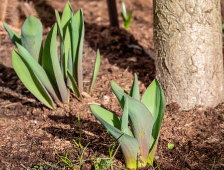 fresh plants sprout in the garden in spring