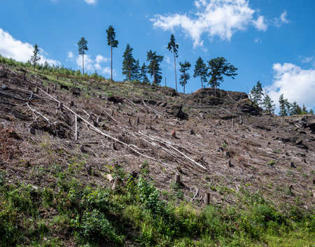 Forest dieback in Germany Pest infestation Nature protection