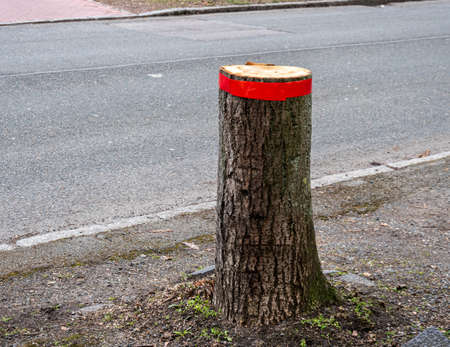 Felling trees in the city in spring