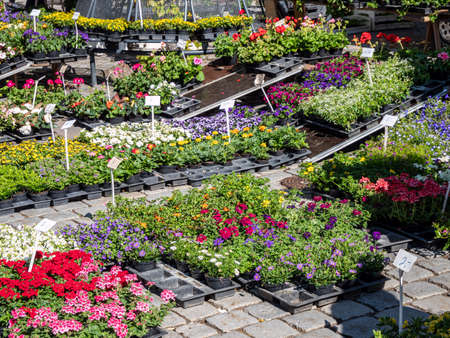 various flowers and plants in the garden market